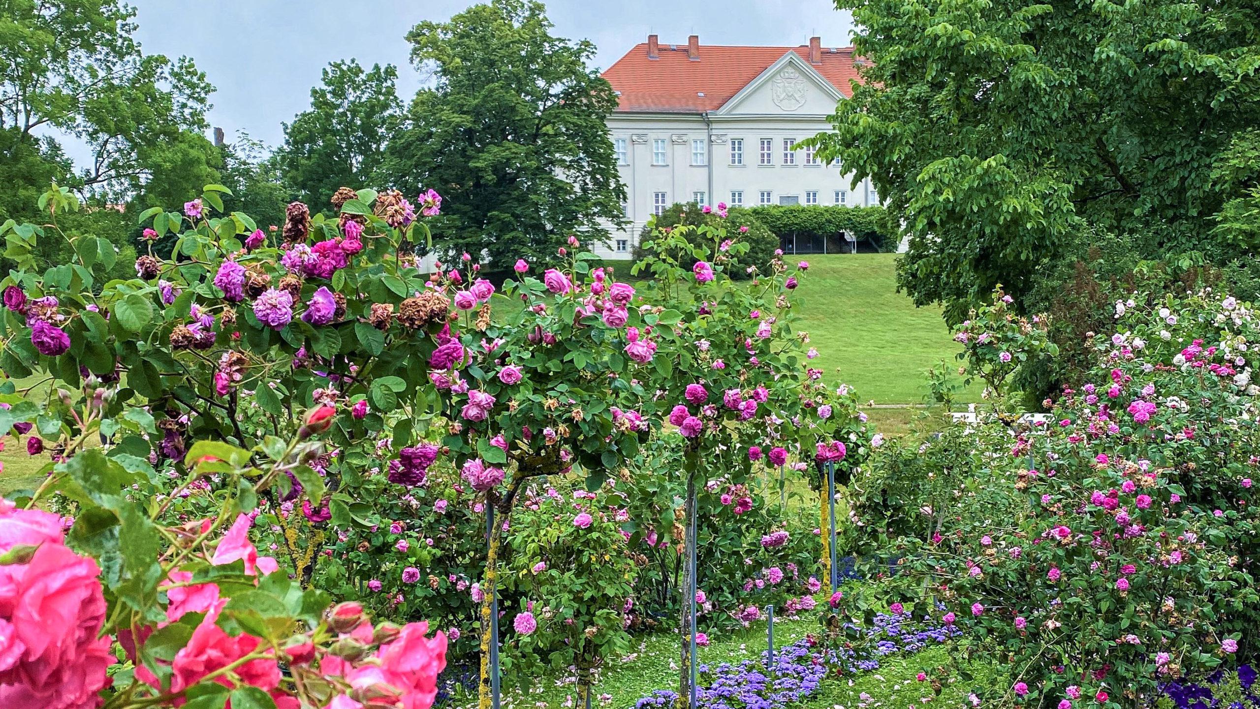 Zum Luisen-Schloss Hohenzieritz